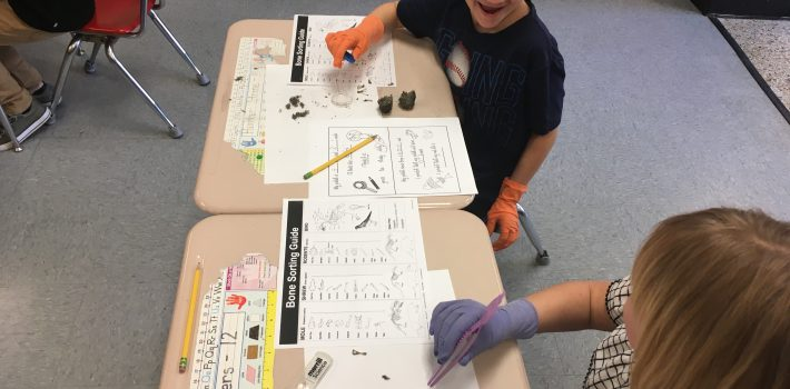 Owl Pellets Science Lab